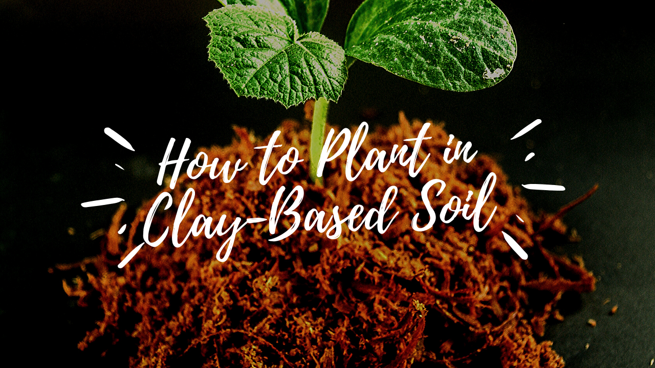 How to Plant in Clay-Based Soil